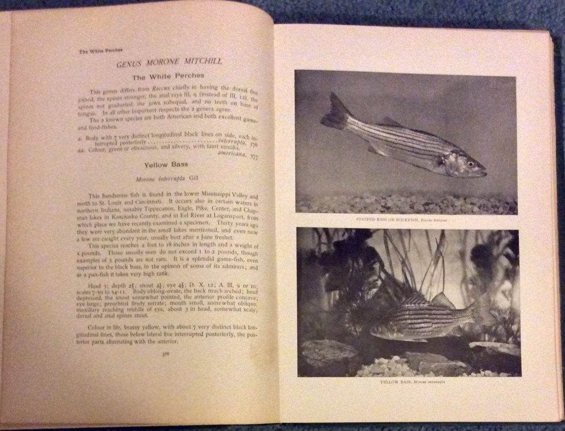 ANTIQUE 1908 Illustrated Hardcover Fishing Book - 3