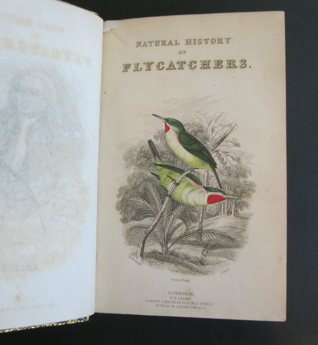The Natural History of Flycatchers by William Swainson