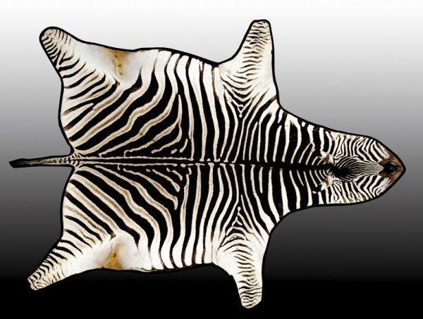 1147: Zebra skin rug