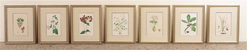 7 HAND COLORED BOTANICAL ENGRAVINGS
