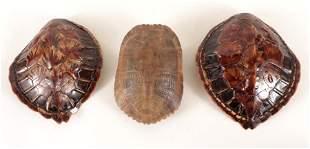 THREE SMALL NATURAL TURTLE SHELLS