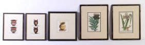 5 Antique Hand Colored Engravings Botanicals