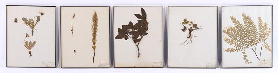 10 FRAMED NATURAL BOTANICALS 1940 - 2