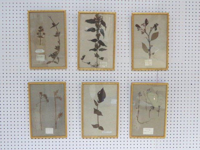 6 BIOLOGICAL PLANT SPECIMENS