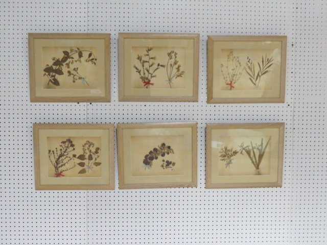 6 BIOLOGICAL PLANT SPECIMENS
