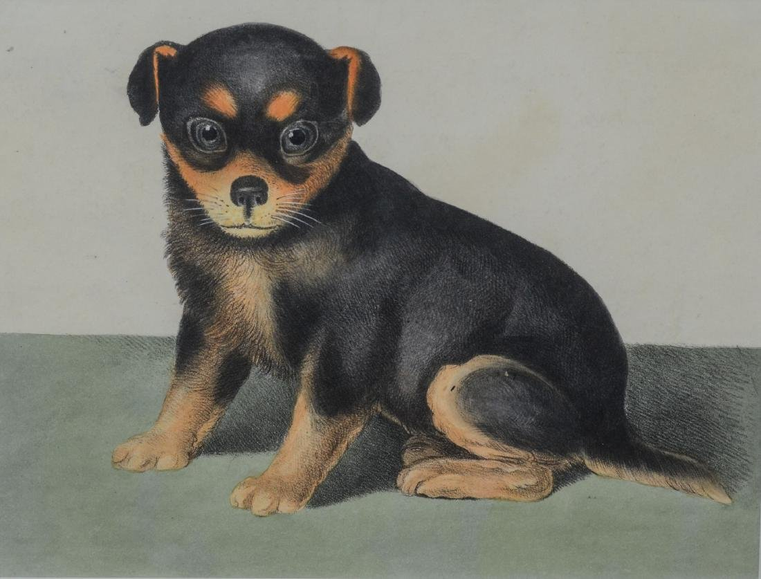 "English lithograph, Seated Dog, c 1800, 8"" x 10"" sight"