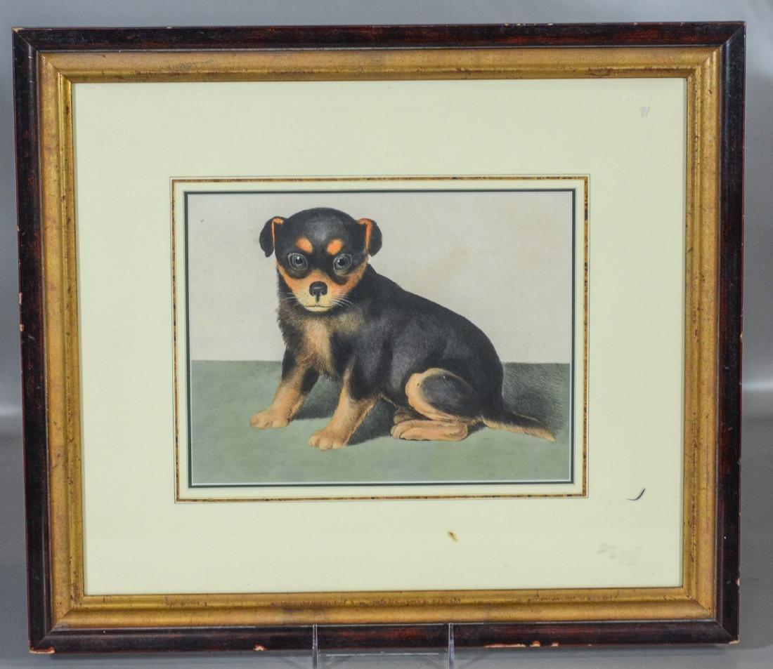 "English lithograph, Seated Dog, c 1800, 8"" x 10"" sight - 2"