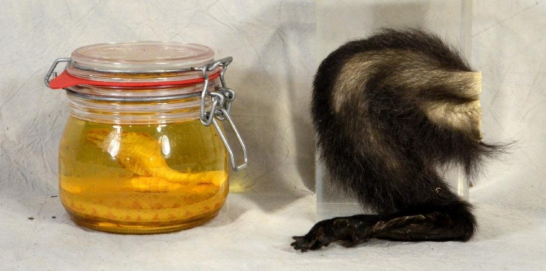Monkey's Paw Old Taxidermy Leg & Foot reminiscent of