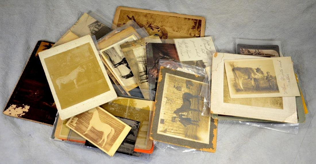 37 pc photo lot: Large Antique Horse Photo Collection