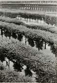 Henri CartierBresson Photograph Palais Royal Gardens