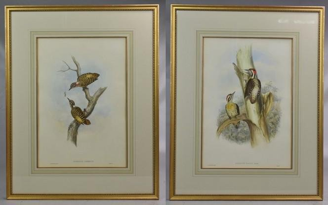 After John Gould (2) Hand Colored Bird Prints