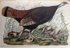 """J J Audubon """"Great American Hen & Young Havell"""