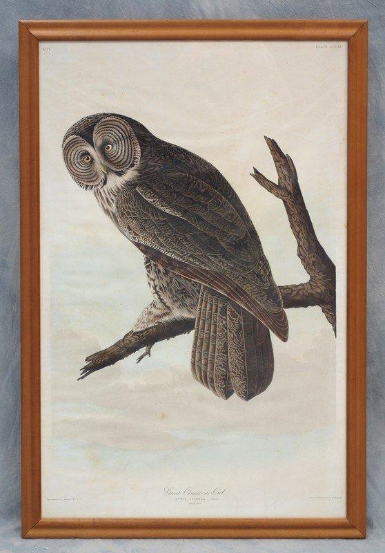 John James Audubon, American, 1785-1851, Great