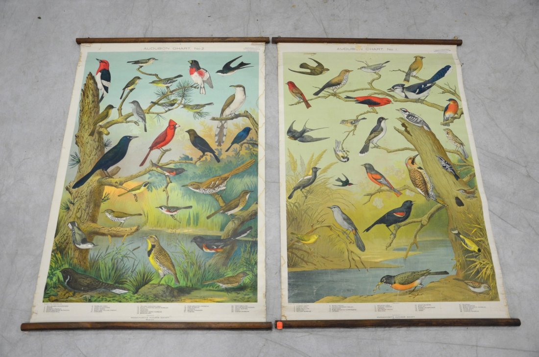 Set of (2) Vintage Audubon Bird Charts #1 and #2,