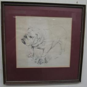 Bulldog Drawing Signed Don Davey