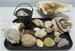 Large Lot of Sea Shells including a basket