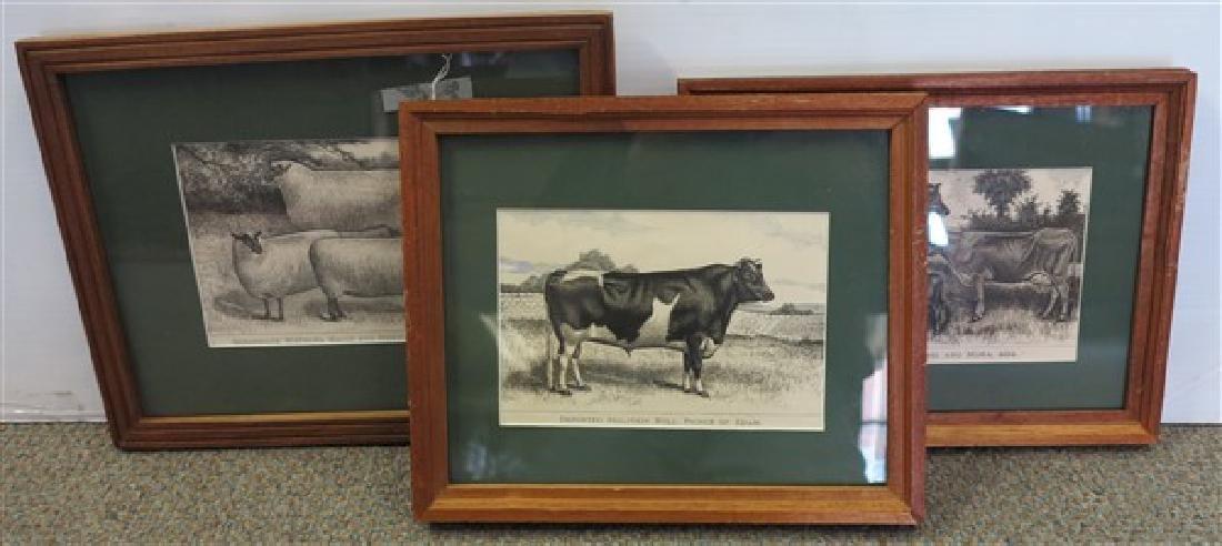 3 Cow Prints