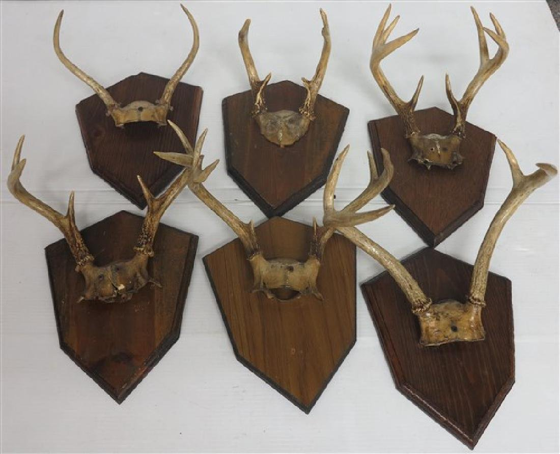Lot of  6 Mounted Antlers