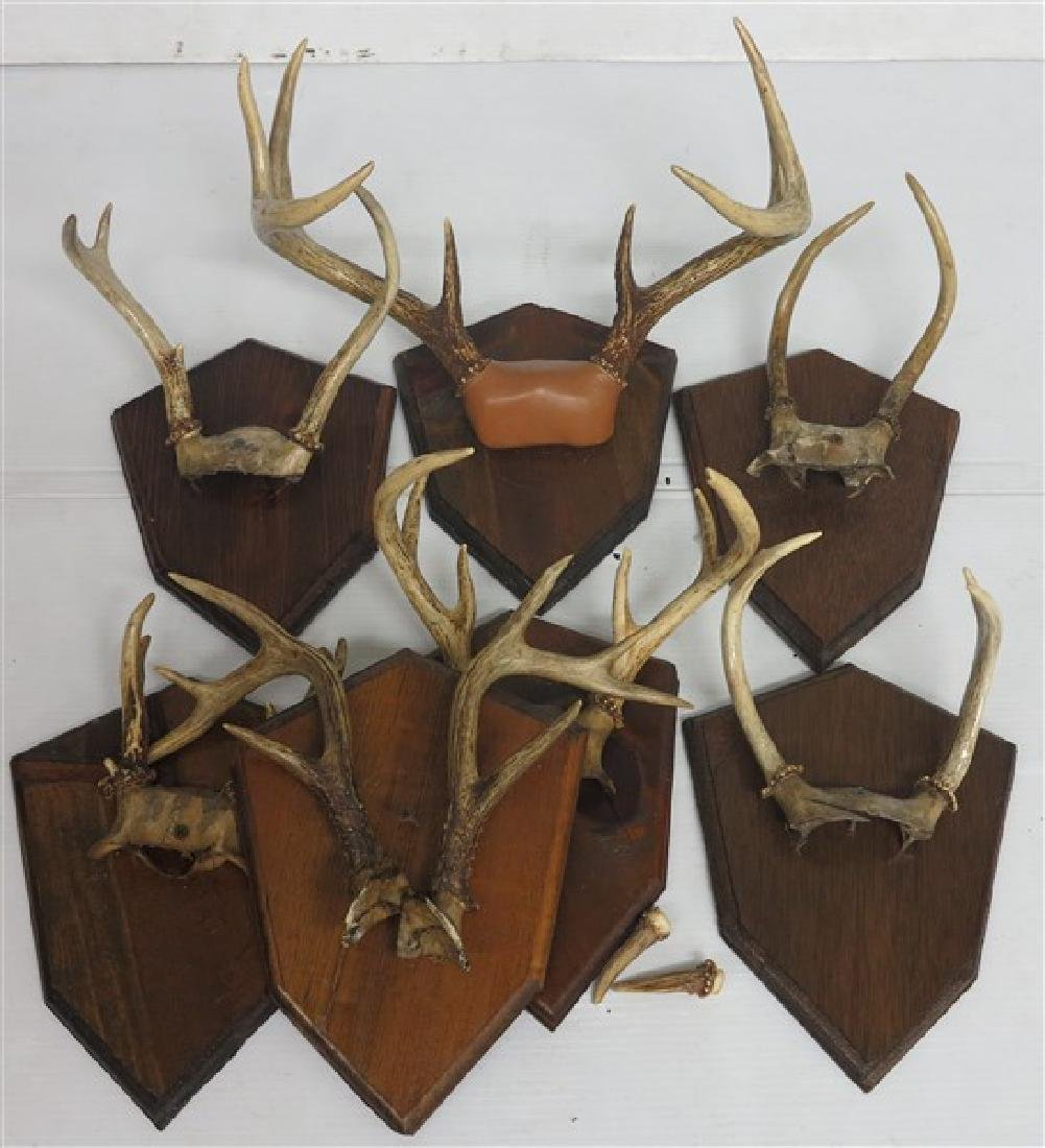 Lot of 7 Mounted Antlers
