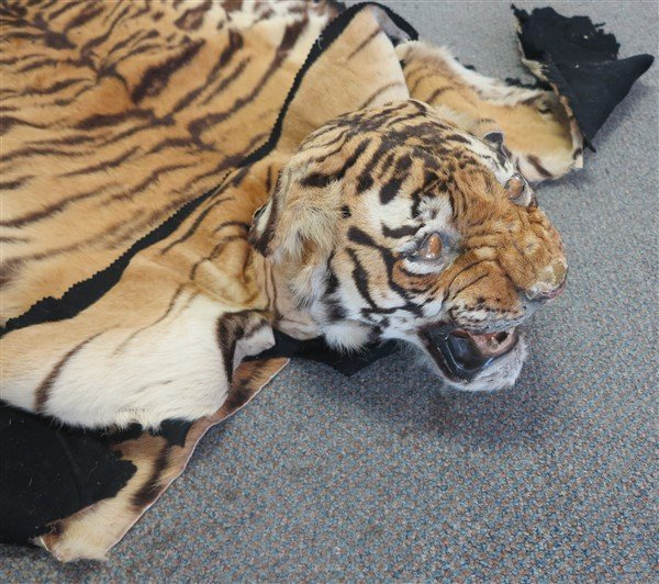 Tiger rug - 2