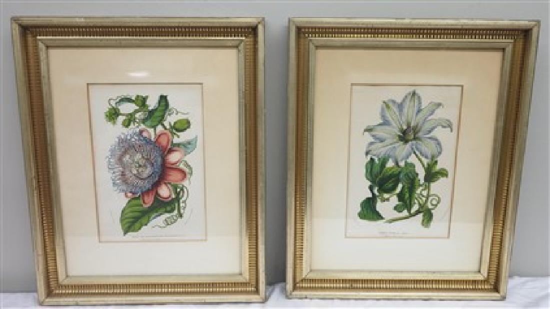 2 framed botanicals
