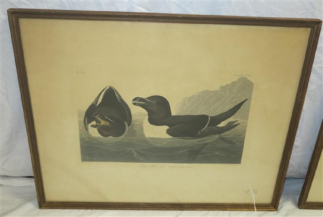 "Two Audubon Prints- 23"" x 29"" - 2"