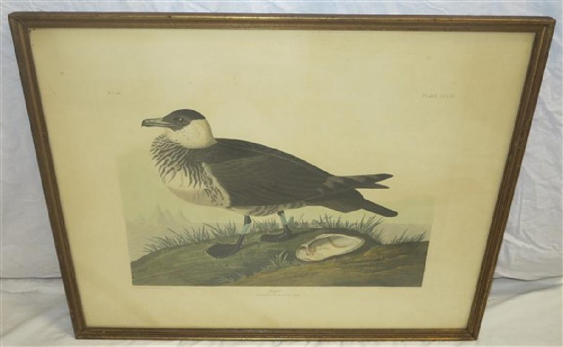 "Two Audubon Prints- 23"" x 29"" - 3"