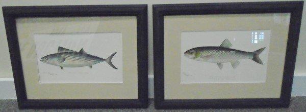 2 Framed Denton Prints