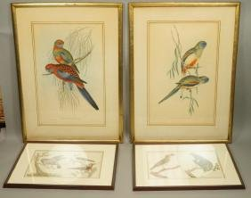 Lot 4 Hand Colored Botanical Bird Parrot Prints.
