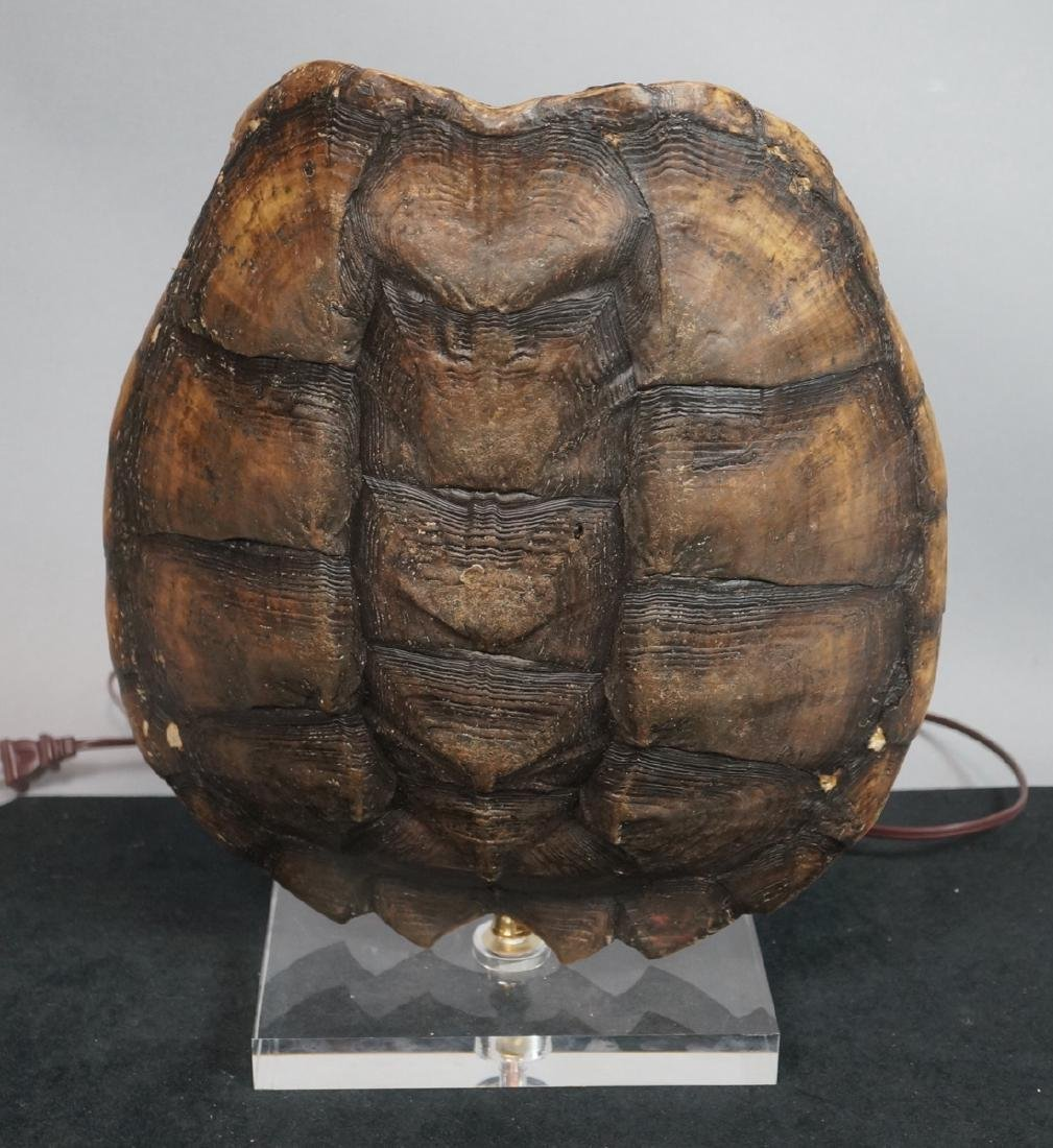 Natural Tortoise Shell Table Lamp. Natural shell