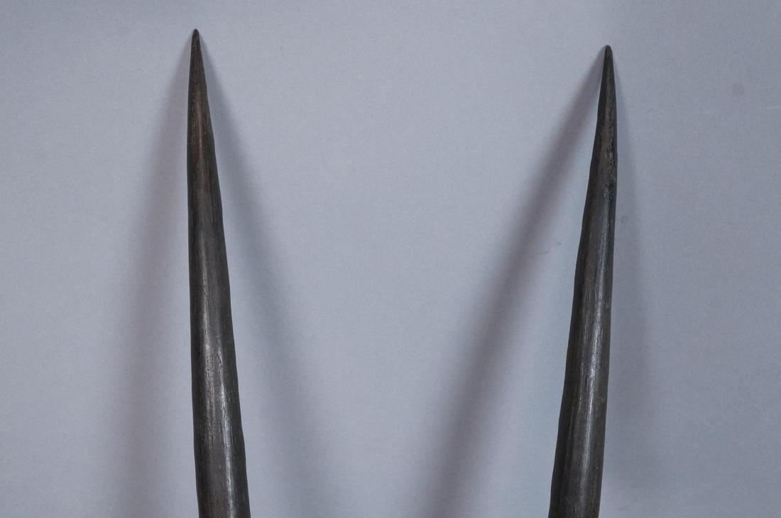 Pr Real Antelope Horns. Long Dark Ribbed forms wi - 2