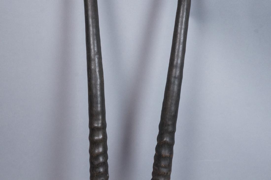 Pr Real Antelope Horns. Long Dark Ribbed forms wi - 3