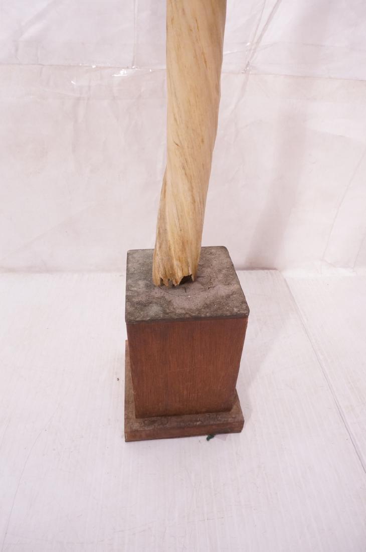 "46"" Genuine Narwhal Tusk Mounted Trophy on Wood B - 5"