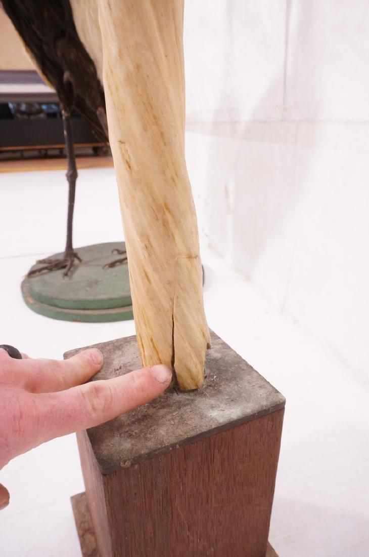 "46"" Genuine Narwhal Tusk Mounted Trophy on Wood B - 7"