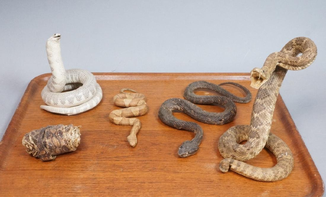 Lot Taxidermy Snakes, Skins. 4 snake mounts, incl