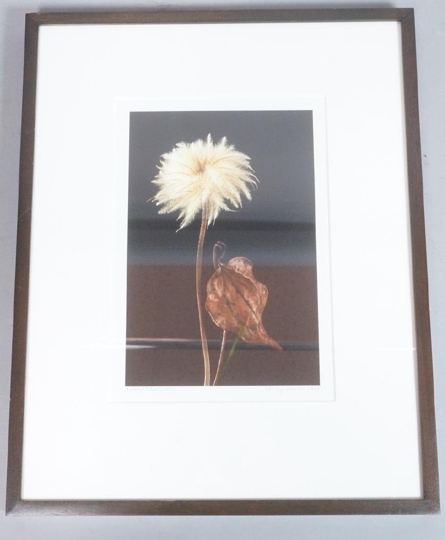 """AMY LAMB """"Dried Clematis"""" Digital Photograph. 199"""