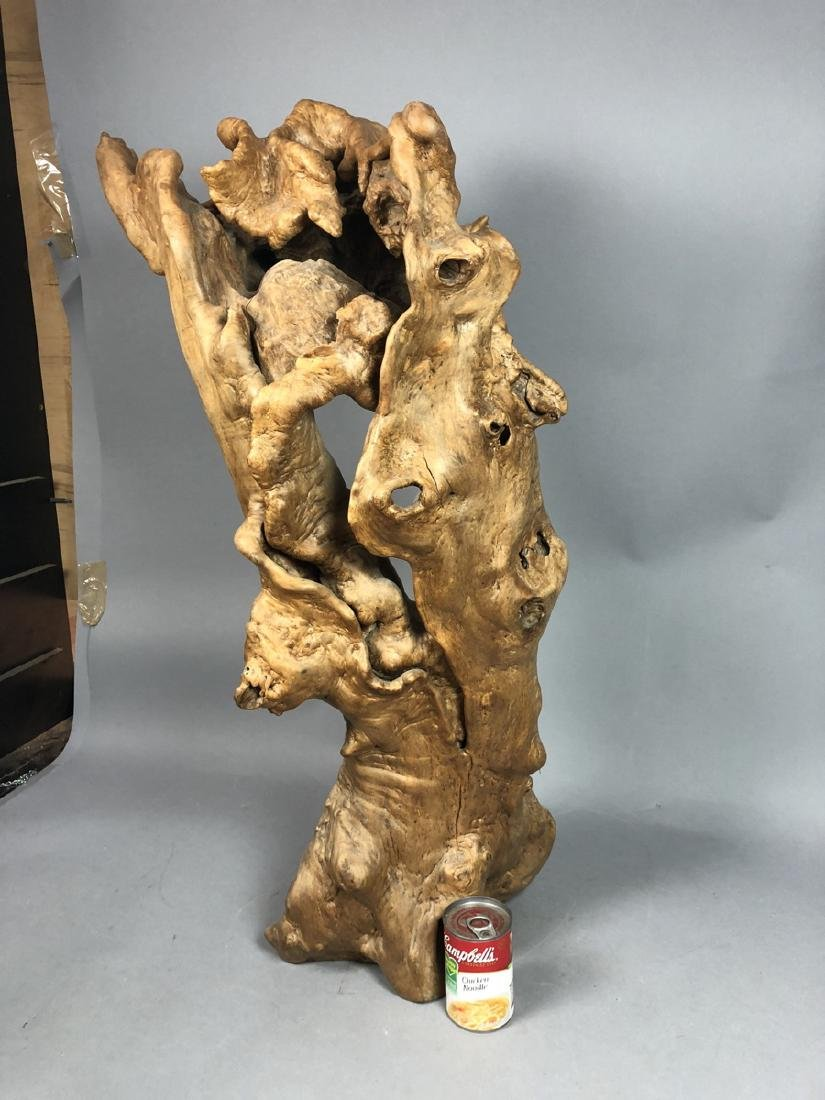 Natural Tree Burl Specimen Sculpture. Large biomo - 4