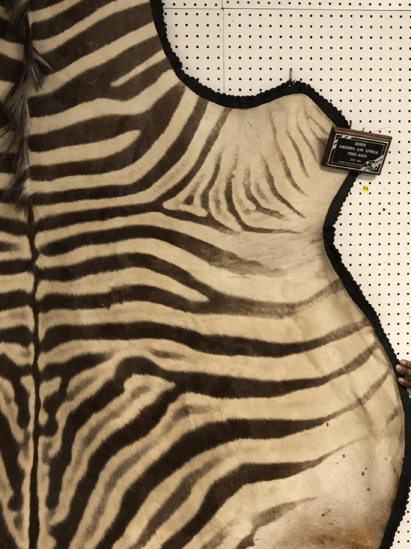 Large ZEBRA Skin Hide Rug. Full Head & Partial Ta - 4