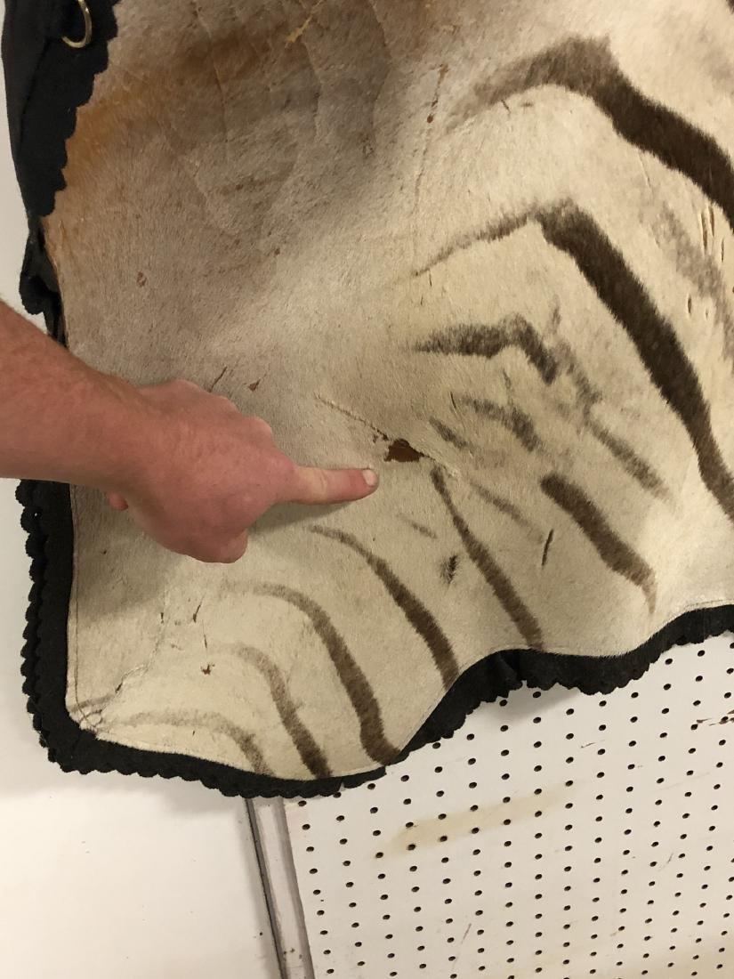 Large ZEBRA Skin Hide Rug. Full Head & Partial Ta - 7