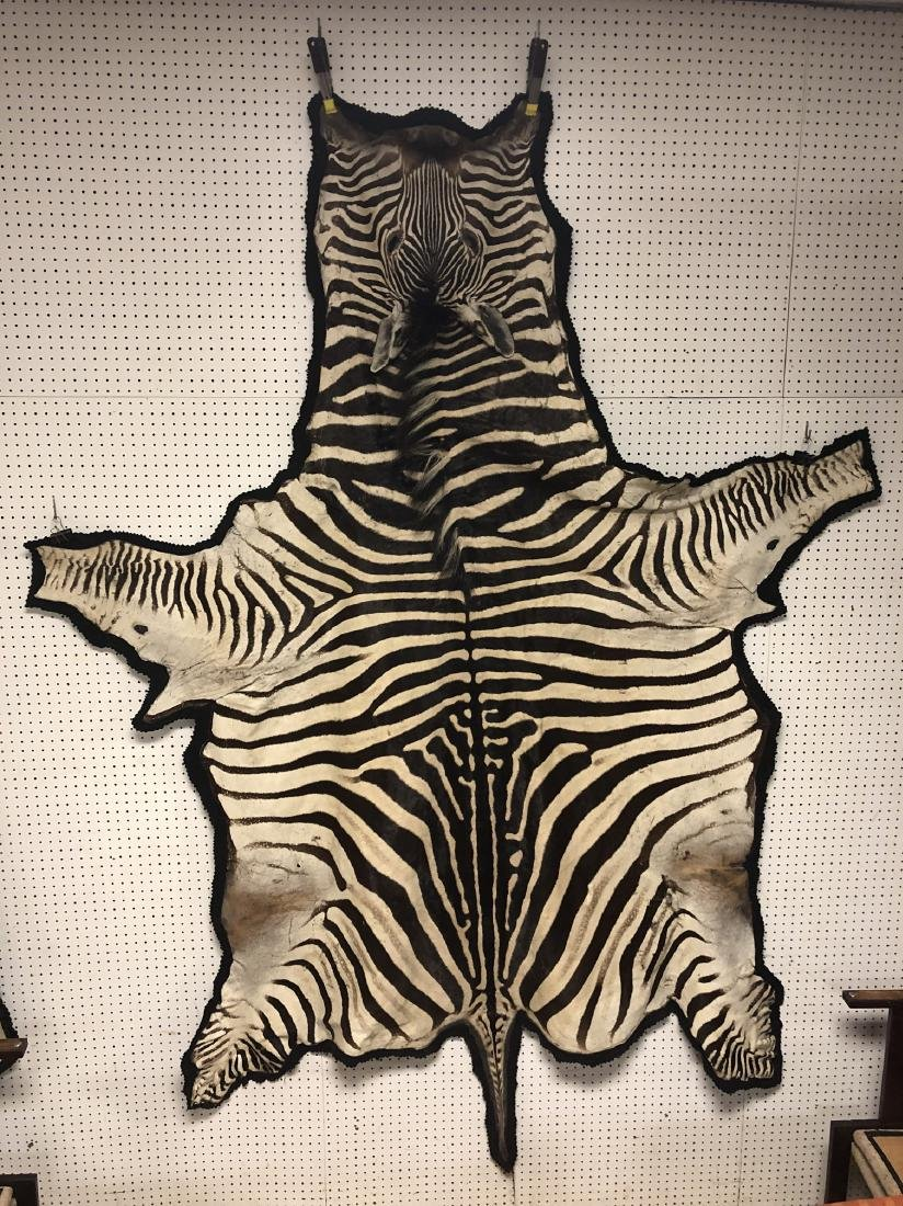 Genuine Zebra Skin Hide Rug. Complete head with 3