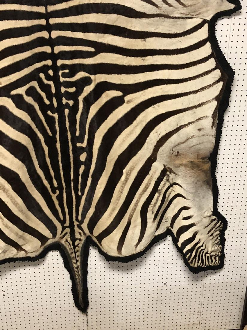 Genuine Zebra Skin Hide Rug. Complete head with 3 - 6