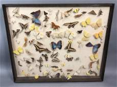 Vintage Shadow Box Mounted Butterflies. Cabinet o