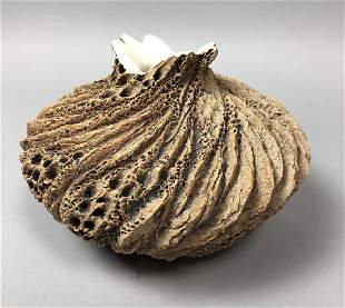 ANN GOLDMAN Organic Artisan Pottery Vase. Bark li