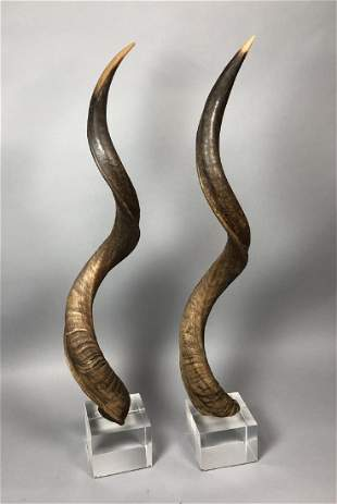 Pr Tall Antelope Horns mounted on Lucite Cube Bas