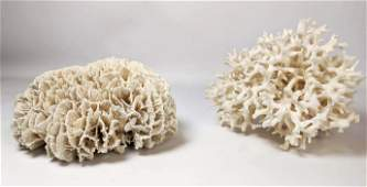 Two Large Pieces Natural Coral. Sea Life. Beach
