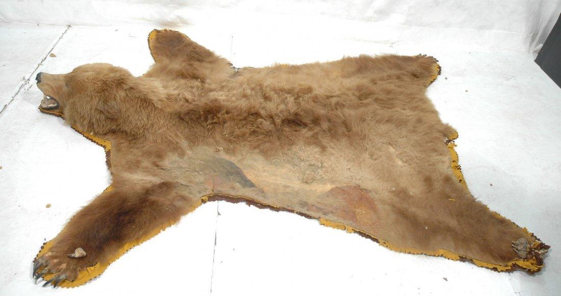 Full Body Kodiak Bear Skin Rug. Full Head. Taxide
