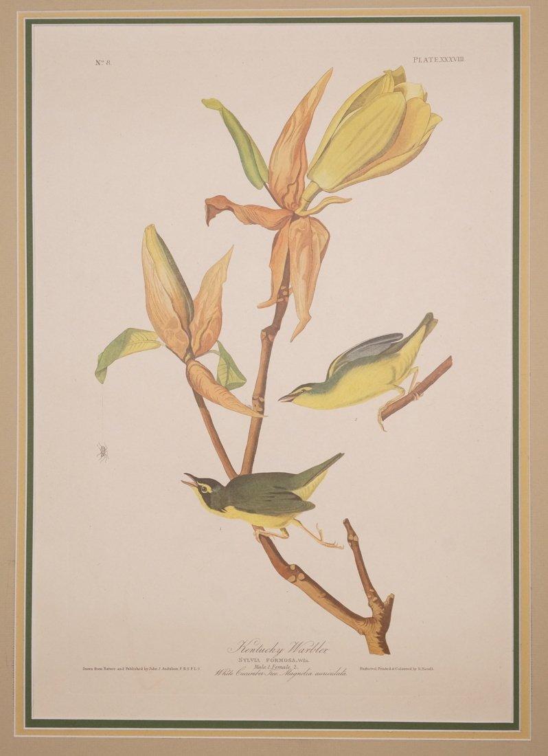 "John J Audubon Book Plate. ""Kentucky Warbler"" Syl"