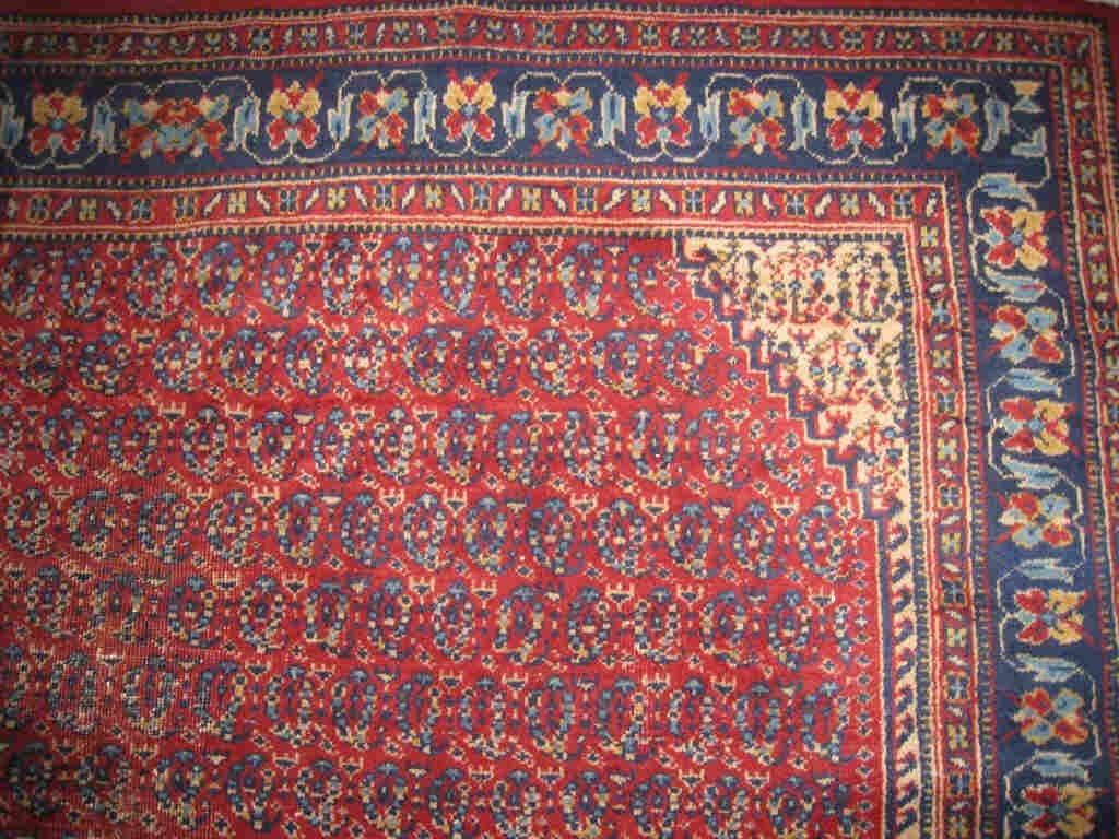 Carpet / Tapis - 2