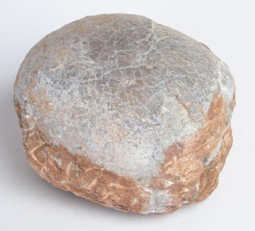 4208: HADROSAUR DINOSAUR EGG -70-80 MILLION YEARS OLD