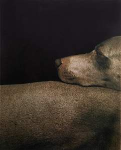 WILLIAM WEGMAN (AMERICAN B. 1943)